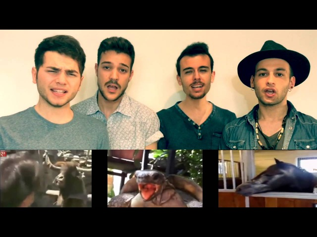 DNCE - Cake By The Ocean (Aula39 - Animal Calls Cover)
