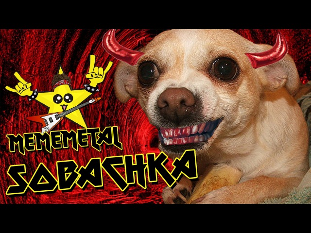 Sobachka Бешеный Пёс by MEMEMETAL