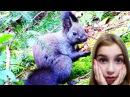 У Лісі ЧОРНА БІЛКА налякала Аню, коли їла з РУК! Та інші ПРИГОДИ HelloAnn у СХІДНИЦІ -