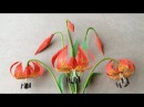 ABC TV | How To Make Michigan Lily Paper Flower From Crepe Paper - Craft Tutorial