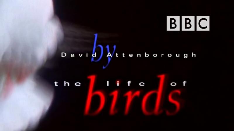 BBC Жизнь Птиц Фильм 1