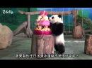 「圓仔」兩歲生日趴 –「野保市集」初登場 Yuan Zai's 2 Years Old Party