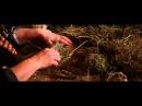 Grażyna Legieżyńska - Zajączek z siana