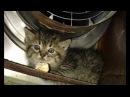 Девушка спасла очень сердитую маленькую кису, отогрела её и пробудила любовь в кошачьем сердце !