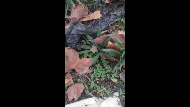 пальмы растут в дикую в Дербенте