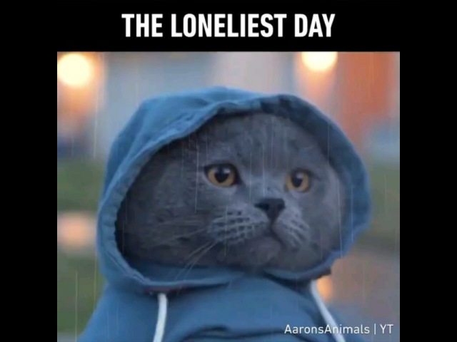 9GAG Go Fun The World on Instagram all by meowself don't wanna be all by meowself 💔 📹@aaronsanimals princemichael love lonely 9gag""
