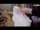 Смешные кошки коты и собаки 2018 Видео Приколы про кошек Приколы про собак Прико