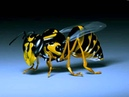 InsideInfo - Honey Bee (Audio Remix)