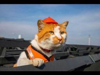 Кот Мостик : Я спокоен за этот объект!