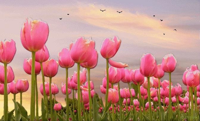 Картинки тюльпаны гифки, хирурга