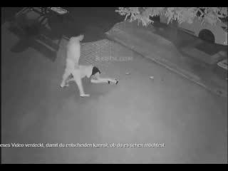 brutally attacks white female then drags her away to rape her.