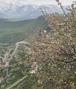 Sati Atanesyan фотография #23