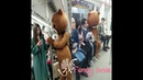 FUNNY VIDEOS WITH TEDDY BEAR COSTUME COMPILATION - ASIAN TIKTOK..