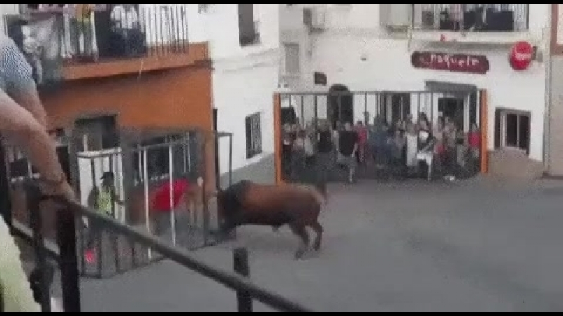 Видео подразнил быка Video teased a bull Dbltj gjlhfpybk ,srf