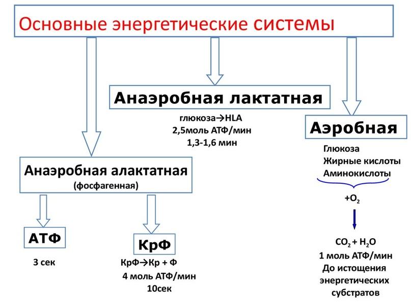 Особенности питания волейболистов ч.1, изображение №1