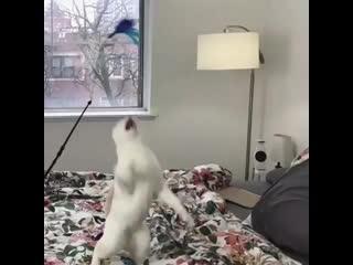 Кот - ниндзя.