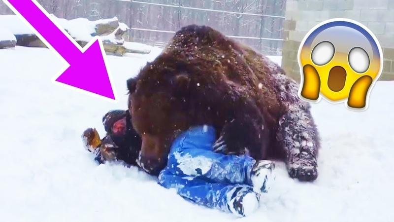 Огромный Медведь Схватил Мужчину И Повалил На Землю Но Все Закончилось Неожиданно
