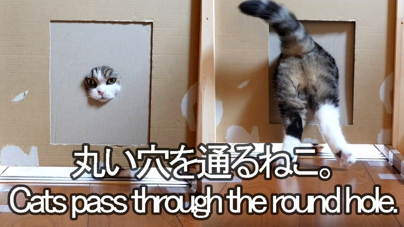 丸穴を通るねこ。-MaruHana pass through the round hole.-