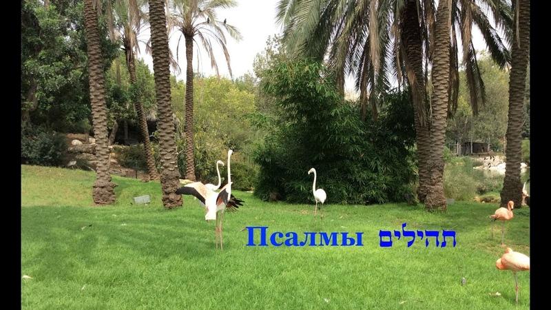 Тэилим (Псалмы), №17 Урок ведёт: Йорам Лемельман