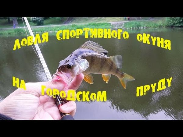Ловля спортивного окуня на городском пруду