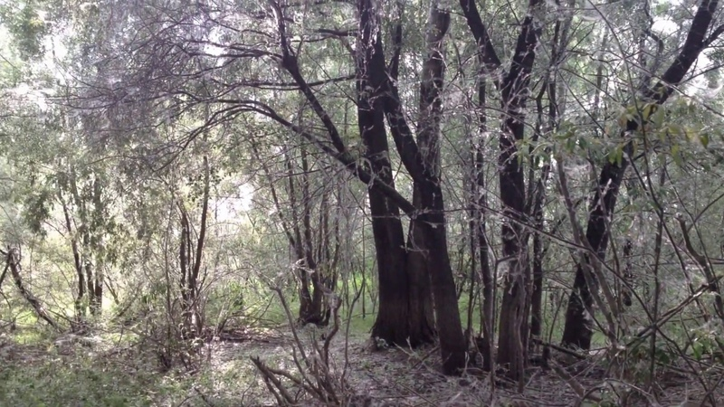 Страшный лес. Новосибирск. Лес из ужасов.Scary forest. Novosibirsk. Forest of horrors.