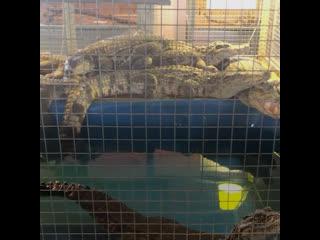В Подмосковье зоозащитники отжимают у фермеров рептилий