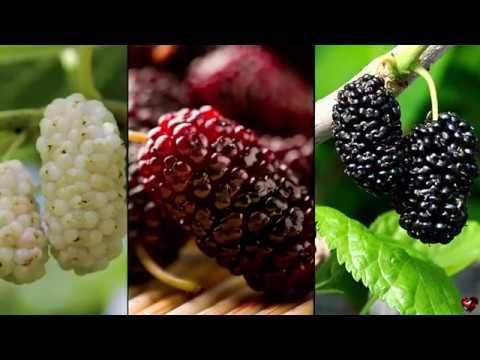 DUDELE miraculoasele fructe uitate de romani