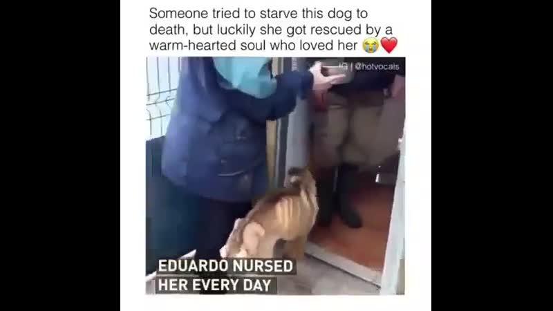 Спасение голодной собаки