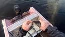 РыбалкаХариусОтдыхЛососьГостевой_дом Рыбалка на спининг и поклёвка лосося