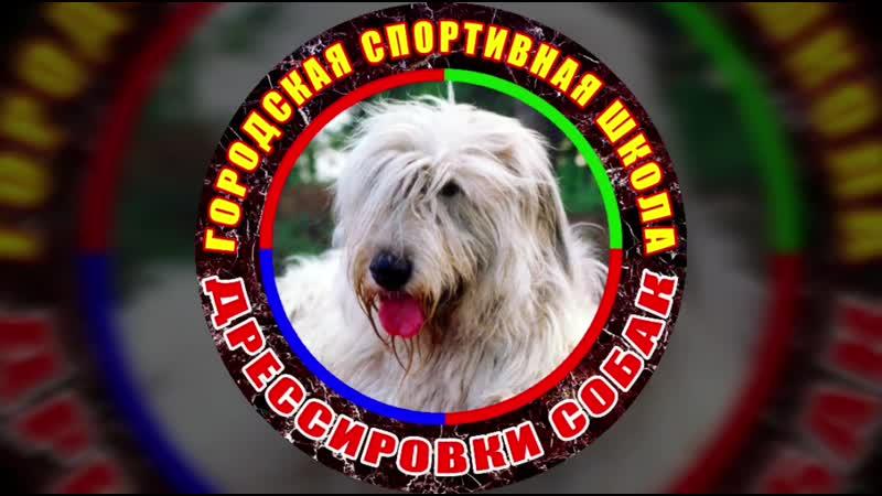 Городская Спортивная Школа Дрессировки собак г.Тольятти 18.mp4
