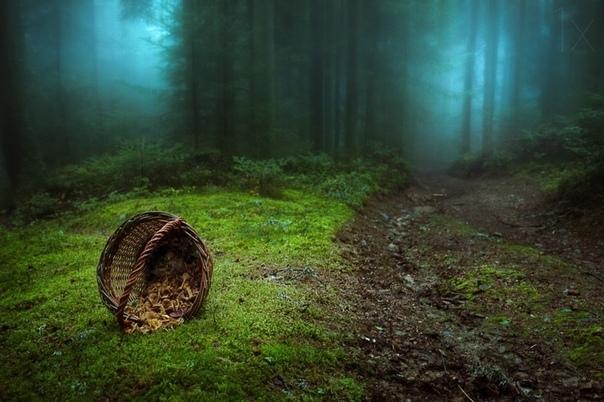 Лесной проводник.
