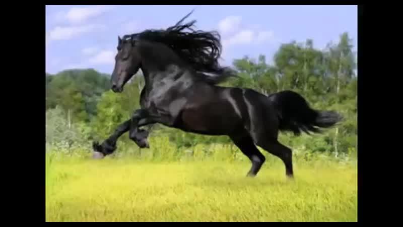 Beautiful animal on planet