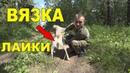 5 советов по вязке собаки для начинающих охотников!
