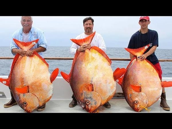 Amazing FISHING,BIG catchУдивительная РЫБАЛКА,КРУПНЫЙ улов4