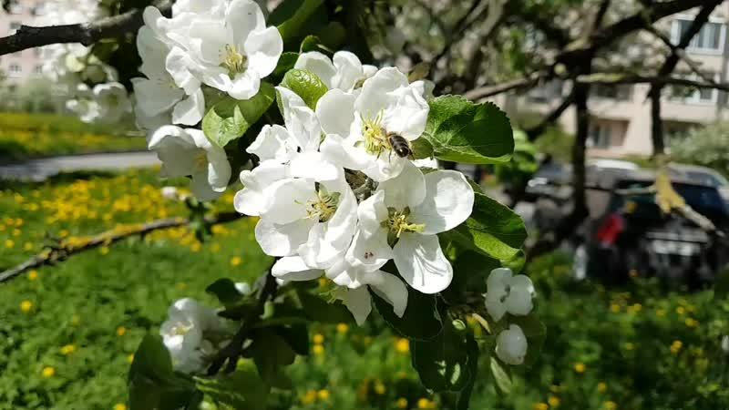 Пушкинский яблоневый дворик