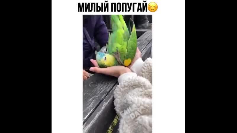 папуг