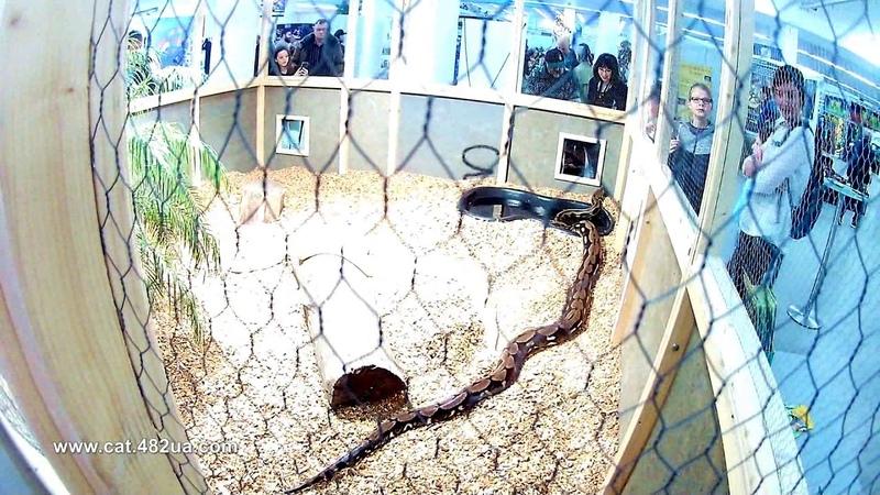 Змеиный вольер на выставке в Германии Sindelfingen 2018