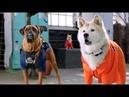 Звездный Щенок 3 Мировой Тур 2018 фильм семейная комедия про собак