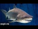Shark Lagoon Cam powered by