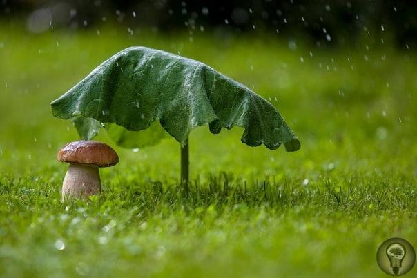 Древнейшие организмы Земли грибы умеют «вызывать» дожди