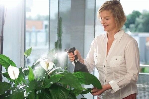 Влажность воздуха - фактор здоровья растений