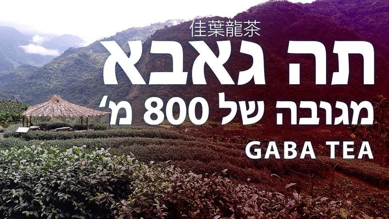 Плантация где производят Габа Улун в горах Алишань 600-800м