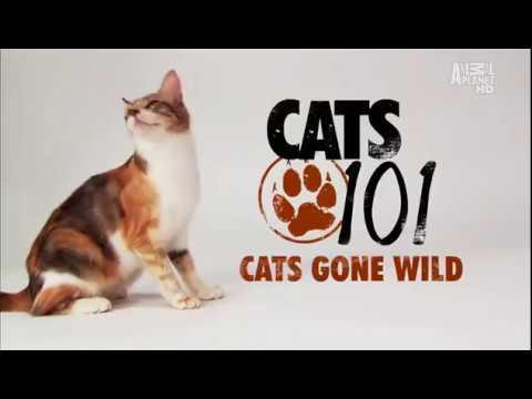 Введение в кошковедение Cats 101 Animal Planet 1 1