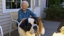 The special friendship between a neighbor and Brody the St Bernard