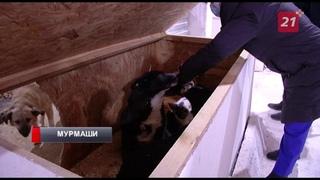 Содержание собак в мурмашинском приюте возмутило северян