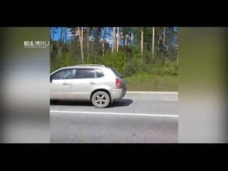 Екатеринбуржец снял на видео трех молодых лосей, гуляющих вдоль Россельбана