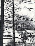 Общий вид на питомник охотничье-промысловых собак. с. Моты. 1972 г.