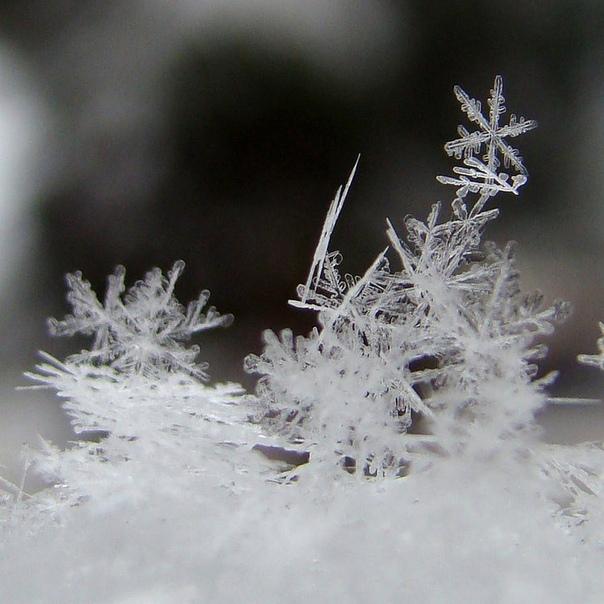 картинки снег снежинки снегопад это такая