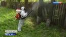 Вести в 20 00 Из за аномально жаркой весны жук короед атаковал дачные участки