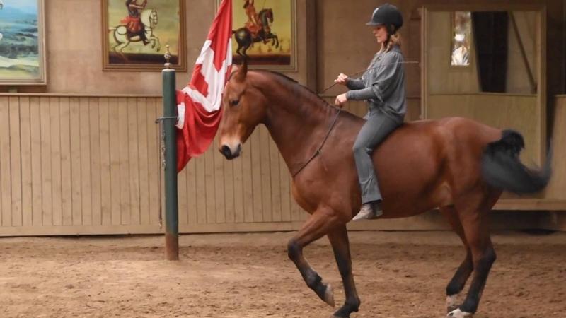Greetje Hakvoort Riding Bongo Neck Rope смотреть онлайн без регистрации